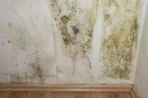 Mold Testing Sterling IL