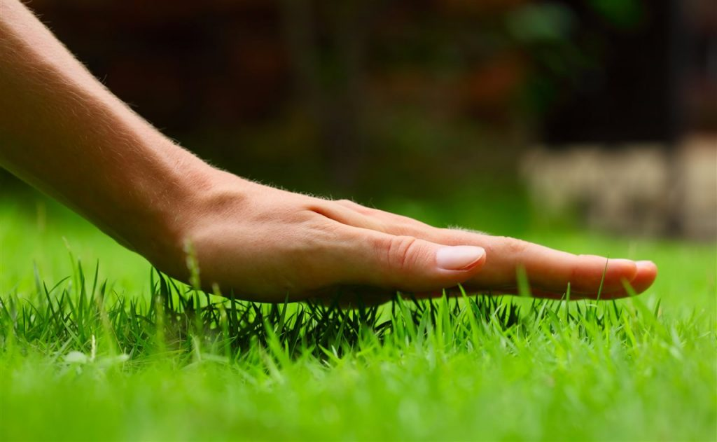 Touching Grass | ALLIN Home Inspections | Lawncare