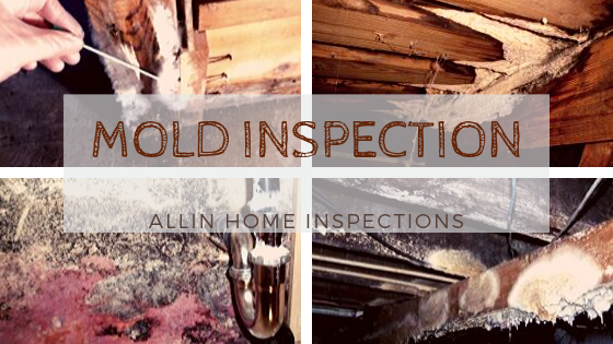 Mold Inspection | ALLIN Home Inspections
